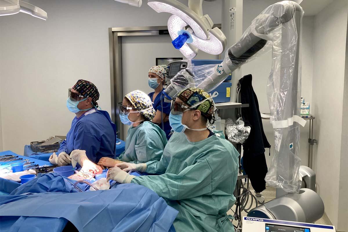 GHHC-trasplante_microquirurgico.jpg