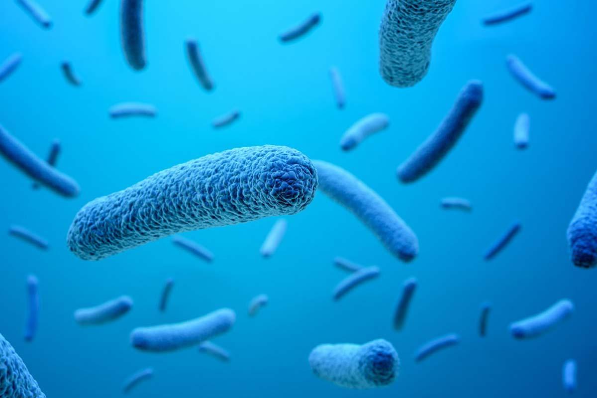 GHHC_Sepsis-Bacteria.jpg